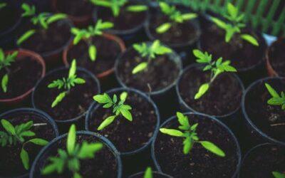 Kom i gang med nye og spændende haveprojekter
