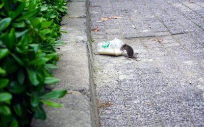 Sådan kommer du for alvor af med mus